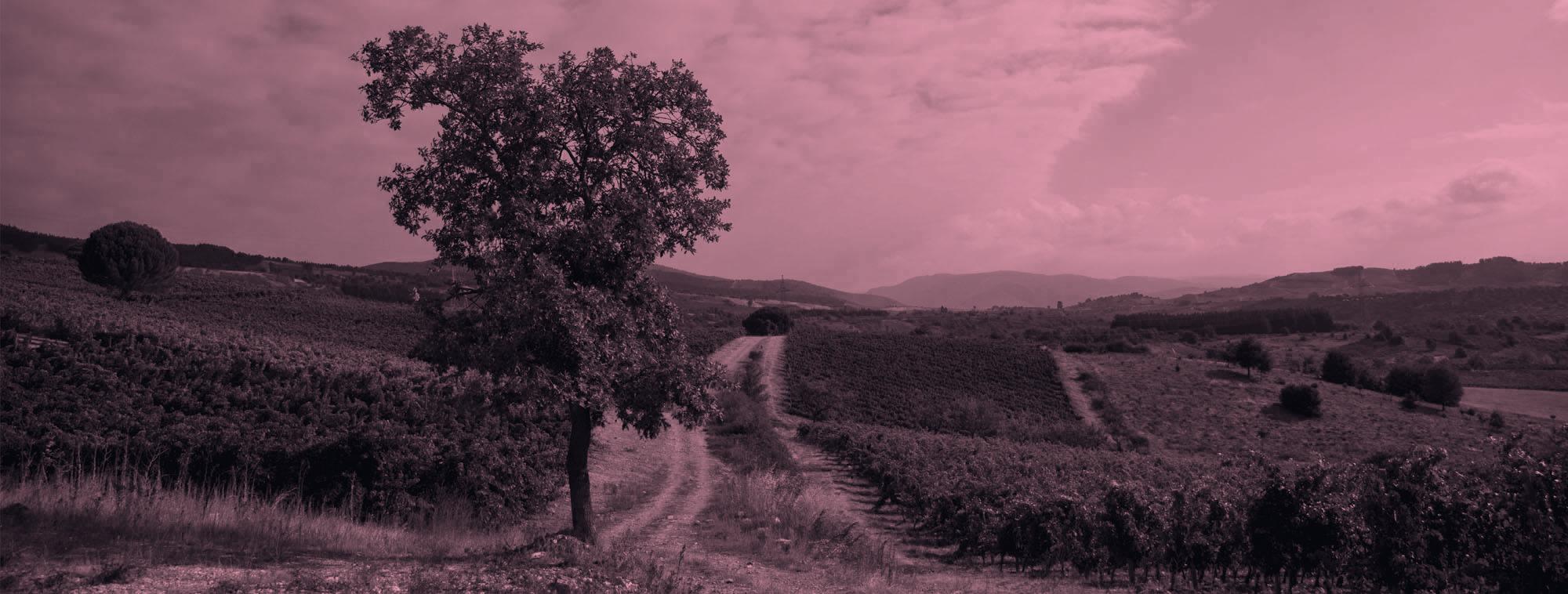 publicidad para promoción del vino y bodegas